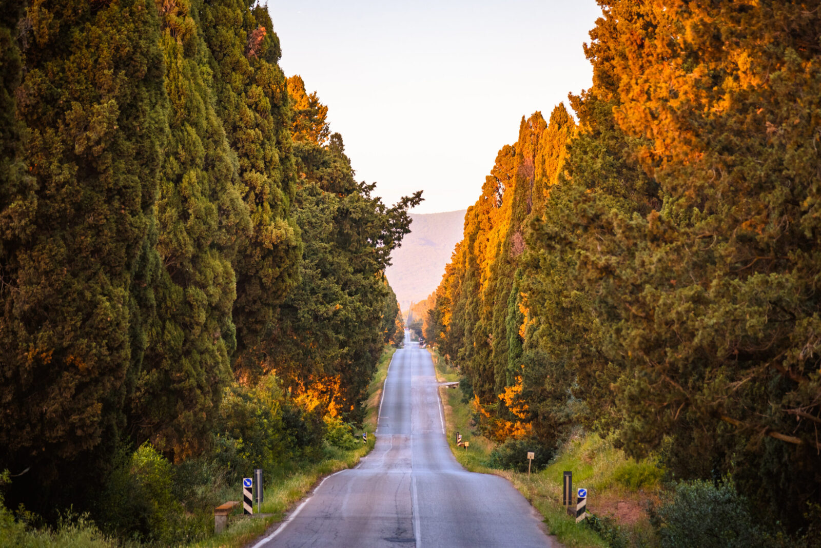 Famous road amidst by cypress trees in Tuscany near the town of Bolgheri, Italy.